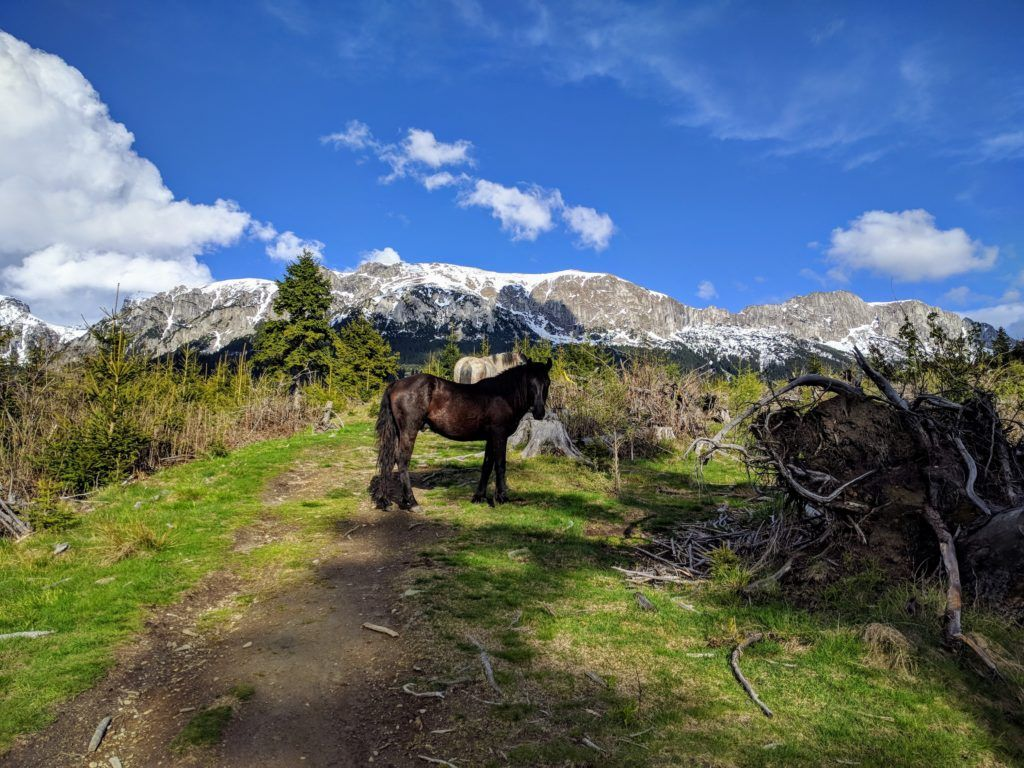 Horses in Bucegi Mountains, Romania