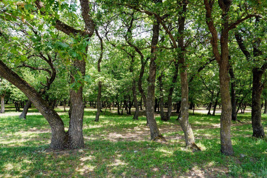 Macin Natioanl Park