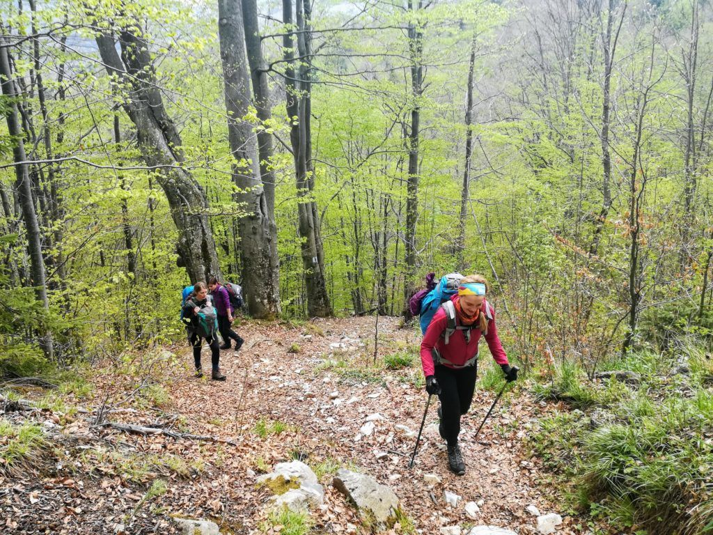 The hike begins with a steep ascent through the forest