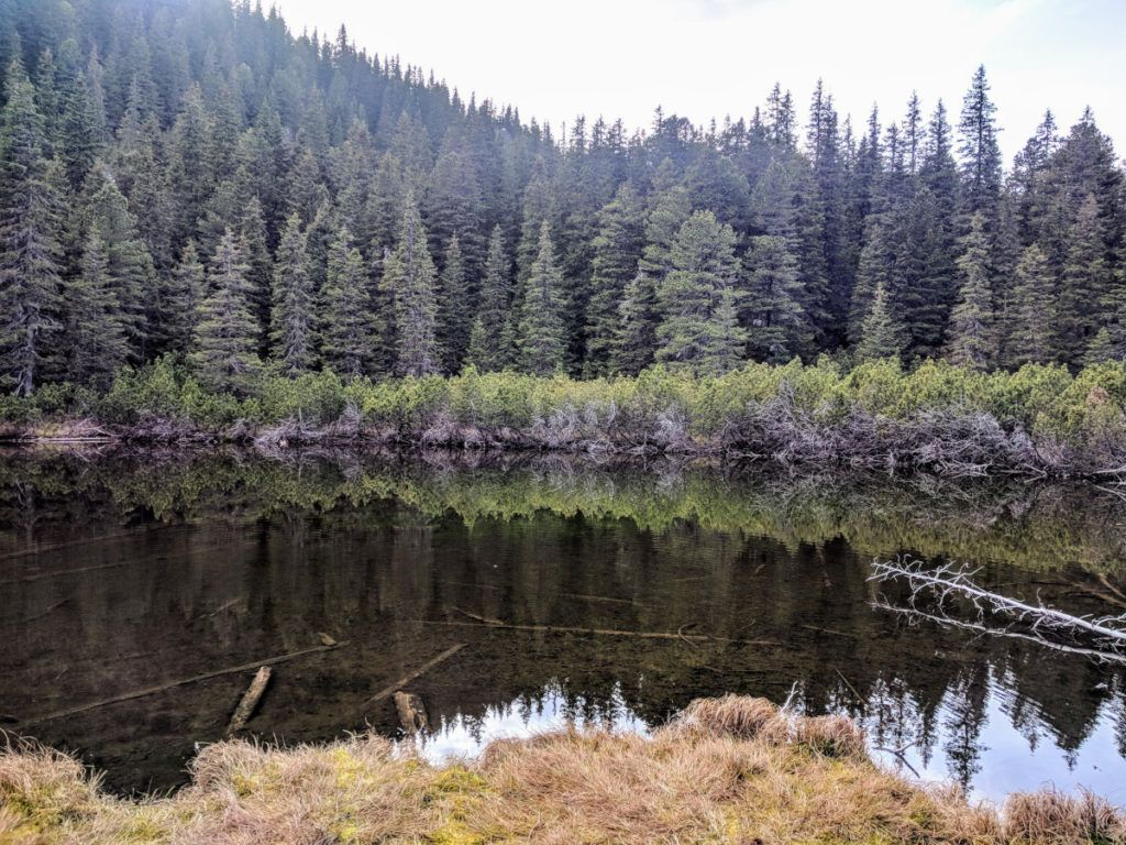 The Tarn Between the Pine Trees (Taul Dintre Brazi)